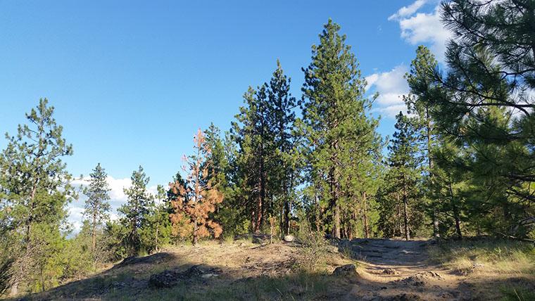 Dishman Hills Conservancy Area - Scenic Trail Ascent - Chris-R.net