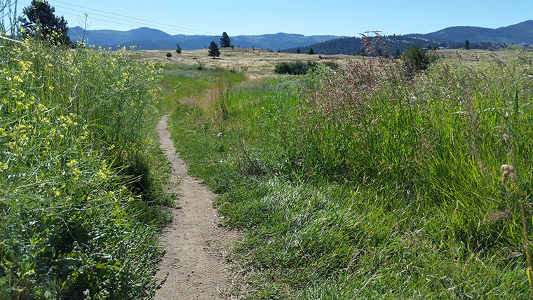 Saltese Uplands Trail System - More Grassy Single Track - Chris-R.net