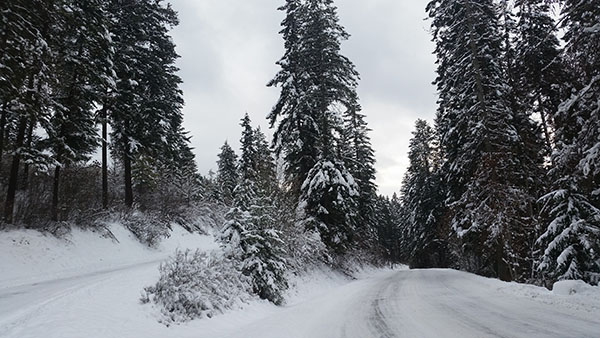 Snow covered Northern Idaho - Chris-R.net