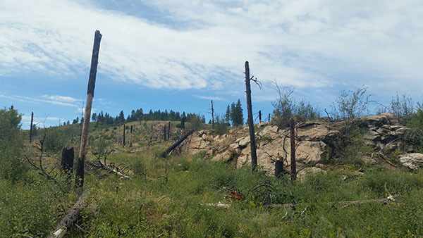 Dishman Hills Trails Scenery - Chris-R.net